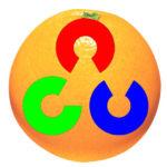 OpenCV ile Portakalın Peşinde